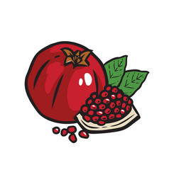 Whole pomegranate with half leaves isolated vector