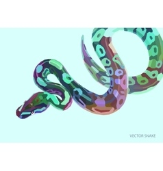 Cool varicoloured poster with lowpoly anaconda vector image vector image