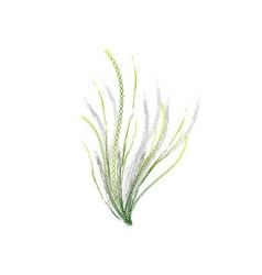 Dna flower on the white vector