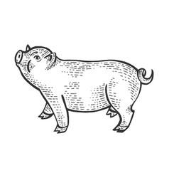 piggy animal sketch engraving vector image