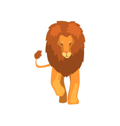 Powerful lion wild predatory animal front view vector