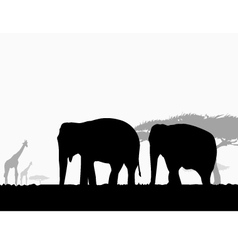 Elephants in Africa Safari vector image