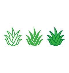 Green aloe vera icon on white background vector