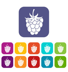 raspberry or blackberry icons set flat vector image