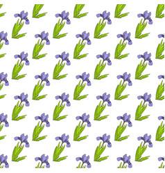 seamless pattern with dwarf lake iris vector image