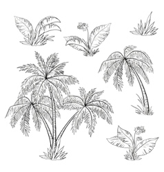 palm trees flowers vector image vector image