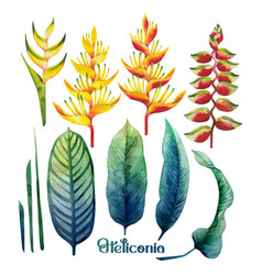 Watercolor heliconia collection vector