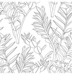 beautiful exotic zamioculcas leaf silhouette vector image