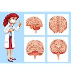 Doctor and brain diagrams vector