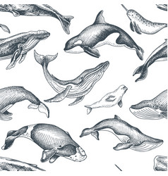 Pattern with whale hand drawn vector