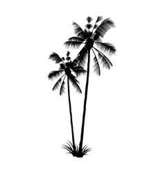 the black palm silhouette exotic tropical tree vector image