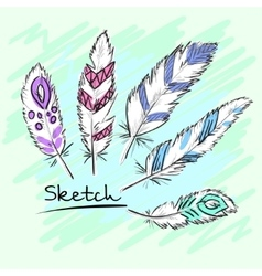 Set of beautiful colored feather Sketch feathers vector image