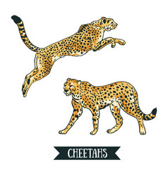 With leopard cheetah jumping animal hand drawn vector