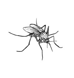 hand drawn sketch of mosquito vector image vector image