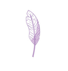 silhouette beauty feather style with decoration vector image vector image
