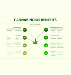Cannabinoids benefits horizontal infographic vector