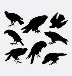 Eagle falcon hawk bird animal silhouette vector