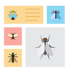Flat icon fly set of housefly tiny mosquito and vector