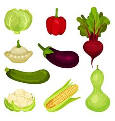 set of fresh vegetables healthy food natural vector image