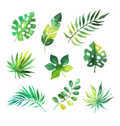 Tropical leaves set jungle trees botanical vector