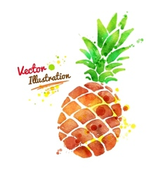 Watercolor pineapple vector image
