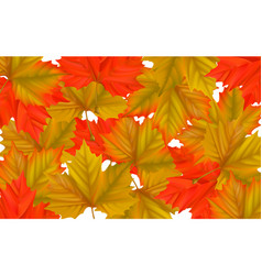 colorful maple leaf background vector image