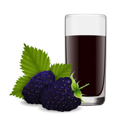 glass of refreshing juice from ripe blackberry vector image