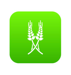 Long-term wheat icon green vector