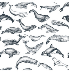 pattern with whale hand drawn vector image
