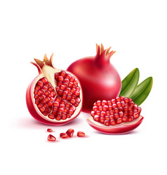 realistic pomegranate with seeds and leaves vector image
