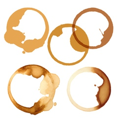 stains coffee vector image