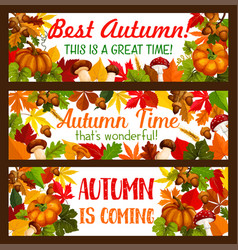 Thanksgiving banner set of autumn harvest holiday vector
