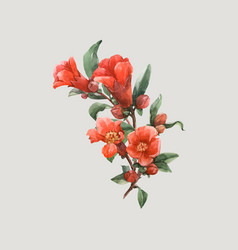 Watercolor pomegranate flowers vector