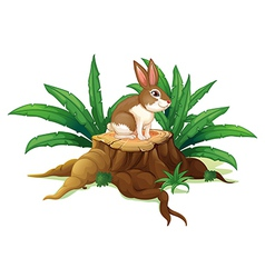 A rabbit sitting above a trunk vector image vector image