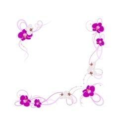 arrangement orchid flowers vector image