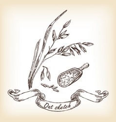 Oats and grain hand drawn vector
