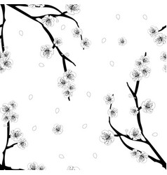 plum plum blossom flower outline on white vector image
