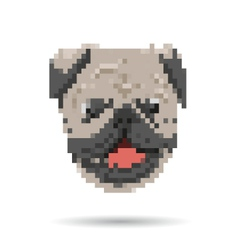 Pug portrait abstract isolated vector