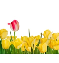 Yellow tulips and one red EPS 8 vector