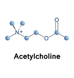 Acetylcholine vector