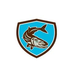 Cobia fish diving down shield retro vector