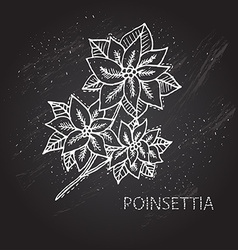 hand drawn poinsettia vector image vector image