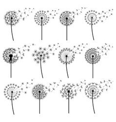 set abstract dandelion blowing isolated vector image