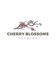 Cherry blossom logo icon vector