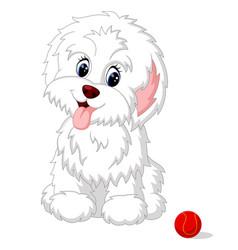 Cute white lap-dog puppy posing vector