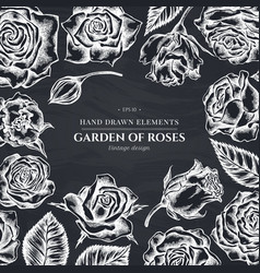 floral design with chalk roses vector image