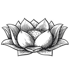 Lotus flower vintage engraved vector