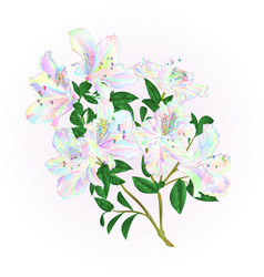 multi colored rhododendron twig with flowers vector image