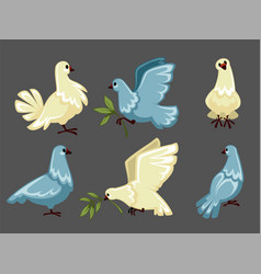 Pigeon or white dove flying with olive branch or vector