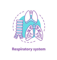 Respiratory system anatomy concept icon vector